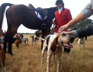 Idiom, dog and pony show